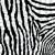 vektör · soyut · cilt · doku · zebra - stok fotoğraf © freesoulproduction