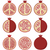 vector set of pomegranate cuts stock photo © freesoulproduction