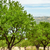 amande · domaine · lac · arbre · paysage · fruits - photo stock © freila