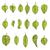 Blätter · Set · unterschiedlich · Hand · gezeichnet · Natur · Blatt - stock foto © frescomovie