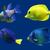 aquário · peixe · tropical · foto · Dubai · água - foto stock © frescomovie
