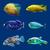 belo · exótico · peixe · tropical · anjo · oceano · subaquático - foto stock © frescomovie