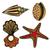 schelpen · collectie · schelpen · vector · ingesteld · zeester - stockfoto © frescomovie