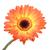 подсолнечника · мнение · изолированный · белый · цветы - Сток-фото © frescomovie