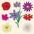 flowers collection stock photo © frescomovie