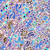 pattern with garden flowers stock photo © frescomovie
