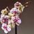 aquarela · rosa · orquídeas · folhas · verdes · natureza · projeto - foto stock © frimufilms