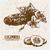 digital vector detailed line art cucumber stock photo © frimufilms