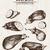 Digital vector detailed line art eggplant stock photo © frimufilms
