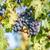 收成 · 時間 · 南瓜 · 下降 · 葉 · 花卉 - 商業照片 © frimufilms