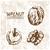almendra · primer · plano · ilustración · tuerca · aislado · blanco - foto stock © frimufilms