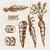 vegetali · cartoon · stile · verdure · fresche · erbe - foto d'archivio © frimufilms
