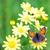 pattern · fiori · farfalla · bianco · verde · abstract - foto d'archivio © frimufilms