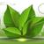 вектора · пузырьки · зеленые · листья · воды · весны · природы - Сток-фото © frimufilms