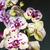 branco · roxo · orquídea · primavera - foto stock © frimufilms