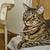 кошки · Председатель · информации · домой · животного · ожерелье - Сток-фото © fxegs
