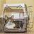 gato · dentro · segurança · caixa · transporte - foto stock © fxegs