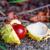 Fuchs · Wald · Winter · Herbst · Markt · Shell - stock foto © g215