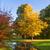 美しい · 秋 · メイプル · 葉 · 市 - ストックフォト © g215