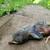 死んだ · 赤ちゃん · 木板 · 春 · 自然 · 背景 - ストックフォト © gabes1976