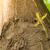 春 · 小枝 · 柳 · 小さな · 緑の葉 · 黄色 - ストックフォト © gabes1976
