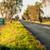 best · startup · groene · snelweg · wegwijzer · weg - stockfoto © gabor_galovtsik