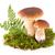 deux · fraîches · champignons · vert · mousse · isolé - photo stock © gbuglok