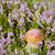 小 · ブラウン · キャップ · ヤマドリタケ属の食菌 · 成長 · 木材 - ストックフォト © gbuglok