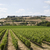 wineyard stock photo © gemenacom
