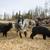 testtartás · fa · természet · farm · fekete · birka - stock fotó © gemenacom