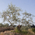 オリーブの木 · ギリシャ語 · ビーチ · 空 · 海 - ストックフォト © gemenacom