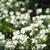 フルフレーム · 花 · 庭園 · 自然 · 背景 · 色 - ストックフォト © gemenacom