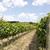 Toskana · bölge · İtalya · eski · ortaçağ · duvarlar - stok fotoğraf © gemenacom
