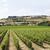 Toskana · İtalya · bölge · vadi · gökyüzü - stok fotoğraf © gemenacom