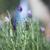 bokor · díszítő · kert · közelkép · virág · tavasz - stock fotó © gemenacom