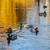 мужчины · крыльями · пруд · воды · красоту · зеленый - Сток-фото © geniuskp