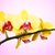 beautiful yellow orchid flowers stock photo © geniuskp
