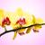 citromsárga · piros · orchidea · edény · izolált · fehér - stock fotó © geniuskp