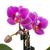 viola · orchidea · bianco · primavera · natura · sfondo - foto d'archivio © GeniusKp