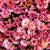flores · rosa · flor · primavera · natureza · jardim - foto stock © GeniusKp
