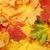 красочный · дерево · лес · природы · фон - Сток-фото © GeniusKp