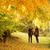 férfi · nő · kéz · a · kézben · sétál · ősz · park - stock fotó © Geribody
