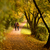 lovers walking hand in hand in autumn park stock photo © geribody