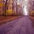 パス · 霧の · 早い · 春 · 森林 - ストックフォト © geribody
