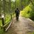 ponte · montagna · foresta · legno · vicino · acqua - foto d'archivio © geribody
