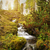 stream · tramonto · acqua · erba · legno · foglia - foto d'archivio © geribody