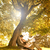 appassionato · amore · parco · albero · cielo · ragazza - foto d'archivio © Geribody