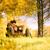 appassionato · amore · albero · autunno · parco · cielo - foto d'archivio © Geribody