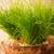 yumurta · kabuk · bitki · kırık · beyaz · Paskalya - stok fotoğraf © gitusik