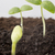 semences · augmenté · jeunes · semis · printemps · feuille - photo stock © gitusik